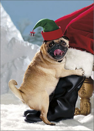 Elf Dog Loving Santa's Leg (1 card/1 envelope) - Christmas Card  INSIDE: Santa, you gotta love him! Happy Holidays
