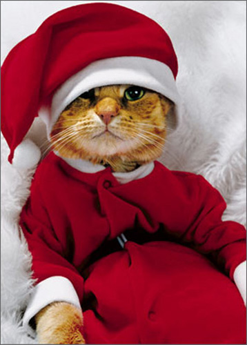 Cat In Santa Suit (1 card/1 envelope) Avanti Funny Christmas Card  INSIDE: Wishing you a warm and cozy Christmas!