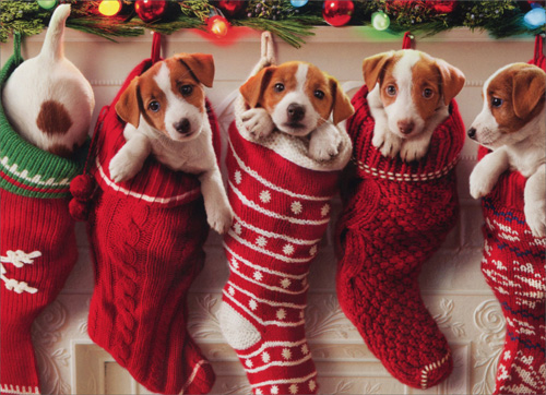 Puppies Hanging In Christmas Stocking Funny / Humorous Dog ...