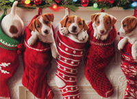 Puppies Hanging In Christmas Stocking (1 card/1 envelope) Avanti Funny Dog Christmas Card