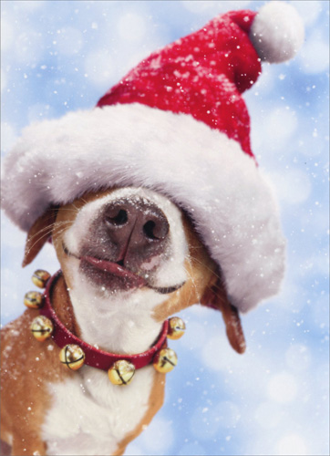 Big dog with santa hat boxed funny christmas cards by