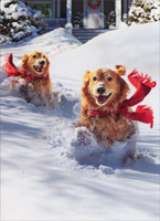 Golden Retrievers In Snow (10 cards/12 envelopes) - Boxed Christmas Cards  INSIDE: Dashing through the snow �laughing all the way! Merry Christmas