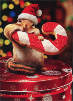 Chipmunk Eats Cookie (1 card/1 envelope) - Christmas Card  INSIDE: Peace, Joy and Cookies! Merry Christmas