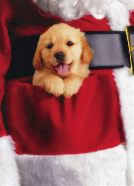 Puppy in Pocket (10 Cards/11 Envelopes) - Boxed Christmas Cards - FRONT: No Text  INSIDE: Wishing you a pocketful of miracles! Merry Christmas.