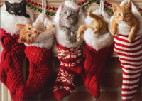 Kittens In Christmas Stocking (1 card/1 envelope) - Christmas Card  INSIDE: May the holidays be filled with your favorite things! Merry Christmas