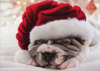 Wrinkly Dog In Santa Hat (1 card/1 envelope) - Christmas Card  INSIDE: Sending you a little Christmas Cuddle!