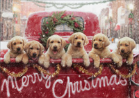 Lab Puppies In Red Truck (1 card/1 envelope) - Christmas Card - FRONT: Merry Christmas  INSIDE: Wishing you all the love your heart can hold. Merry Christmas!