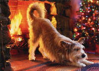 Dog Warms Butt At Fireplace (1 card/1 envelope) - Christmas Card  INSIDE: Chestnuts roasting� Warmest wishes for a very Merry Christmas!