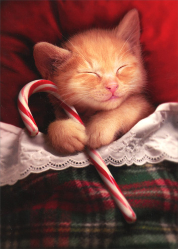 Cat Christmas.Details About Sleeping Kitten Holding Candy Cane Cat Christmas Card Avanti Greeting Card