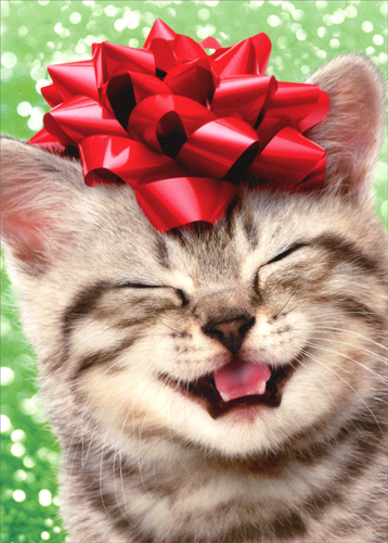 Happy kitten with red bow box of 10 cat christmas cards by avanti store categories m4hsunfo
