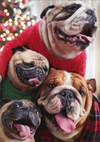 Dogs In Christmas Sweaters Box of 10 Christmas Cards
