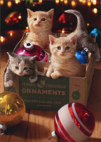 Boxed Cat Christmas Cards.Boxed Christmas Cards With Cats Brand Name Cards Papercards Com