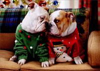 Christmas Bulldogs in Sweaters Christmas Card