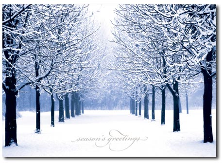 Winter's Path (25 cards & envelopes) Personalized Boxed Holiday Cards