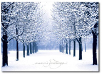Winter's Path (25 cards & envelopes) - Boxed Holiday Cards