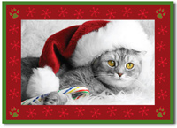 The Cat's Meow Photo Card in Red (25 cards & envelopes)  Boxed Christmas Cards