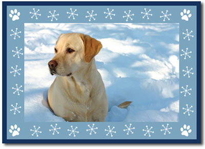 Puppy Paw Prints Photo Card in Blue (25 cards & envelopes) Boxed Christmas Cards