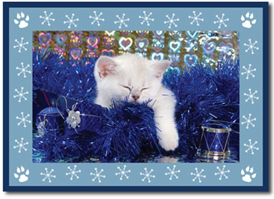 The Cat's Meow Photo Card in Blue (25 cards & envelopes) - Boxed Christmas Cards