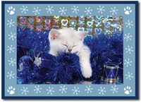 The Cat's Meow Photo Card in Blue (25 cards & envelopes)  Boxed Christmas Cards