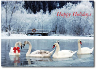 Swans on the Lake (25 cards & envelopes) - Boxed Holiday Cards