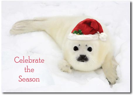 Festive Seal (25 cards & envelopes) Personalized Funny Boxed Holiday Cards