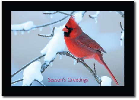 Solitary Cardinal (25 cards & envelopes) Personalized Boxed Holiday Cards