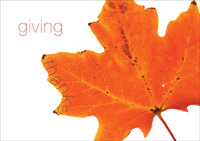 Giving Thanks (25 cards & envelopes) - Boxed Thanksgiving Cards