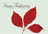 Intricate Leaf (25 cards & envelopes) - Boxed Thanksgiving Cards