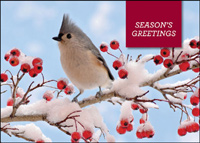 Bird and Berries (25 cards & envelopes) - Boxed Holiday Cards