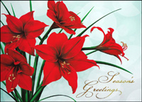 Holiday Amaryllis (25 cards & envelopes) - Boxed Holiday Cards