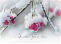 Winter Berries (25 cards & envelopes) - Boxed Holiday Cards
