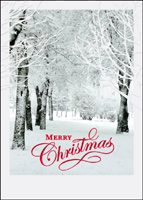 Glittering Trees (25 cards & envelopes) - Boxed Christmas Cards