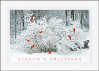 Cardinal Gathering (25 cards & envelopes) - Boxed Holiday Cards