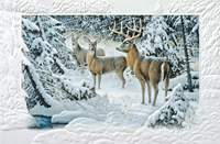 The Edge of Light (25 cards & envelopes) - Boxed Christmas Cards