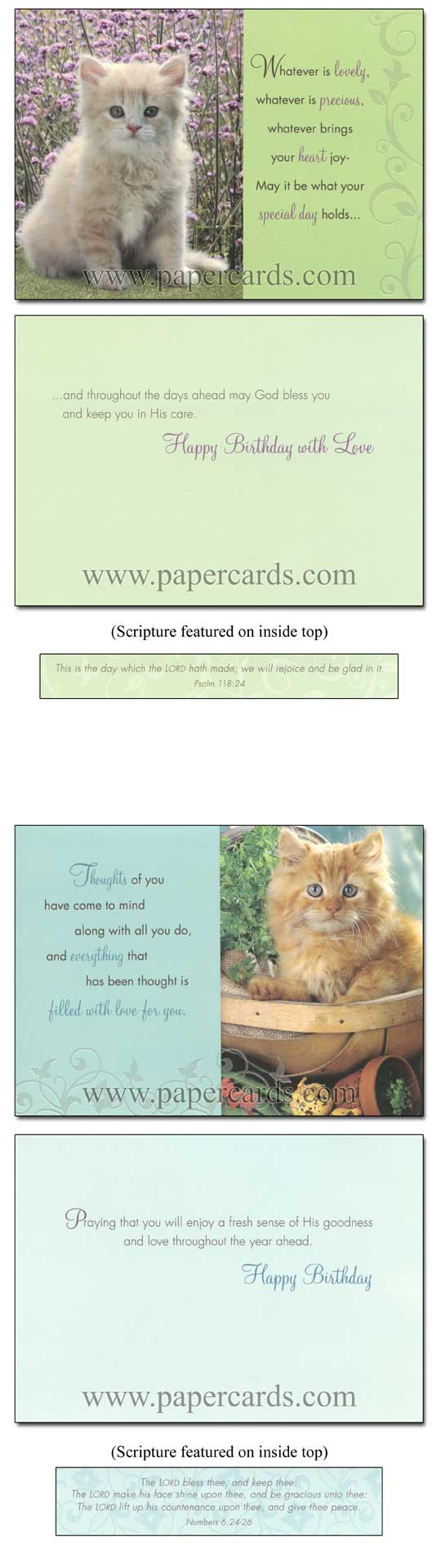 Curious Kittens (12 Birthday Cards with envelopes) - Boxed Scriptured Birthday Cards - FRONT: Various  INSIDE: Various