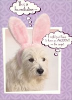 Accident on Carpet (1 card/1 envelope) Designer Greetings Funny Easter Card