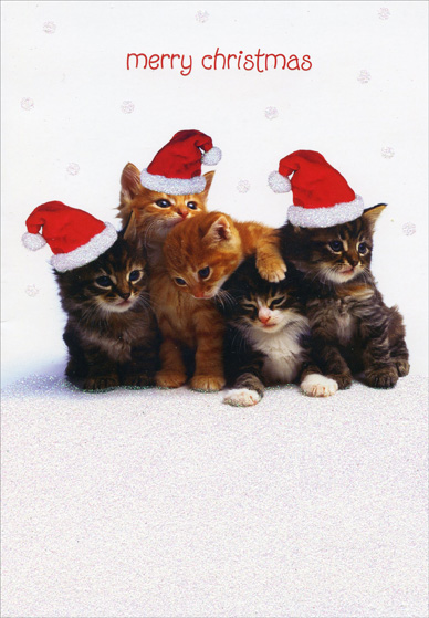 Bunch of Kittens (1 card/1 envelope) - Christmas Card - FRONT: merry christmas  INSIDE: Hope your Christmas is warm and cuddly!