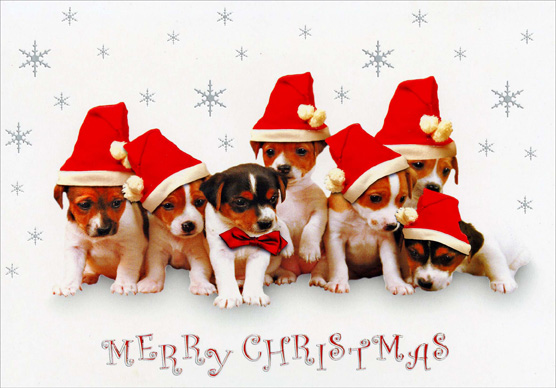 Puppies in Santa Hats (1 card/1 envelope) - Christmas Card - FRONT: MERRY CHRISTMAS  INSIDE: With warm and friendly wishes for a Merry Christmas and a Happy New Year!