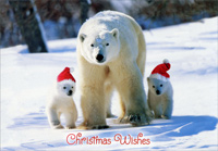 Polar Bear with Cubs (18 cards/18 envelopes) - Boxed Christmas Cards - FRONT: Christmas Wishes  INSIDE: Hope your Christmas is filled with laughter, love and good cheer.