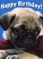 Pugs & Kisses (1 card/1 envelope) Freedom Greetings Funny Dog Birthday Card