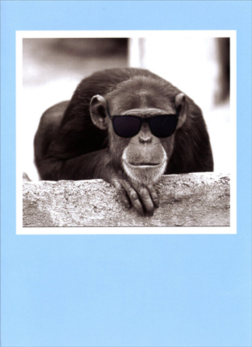 Chimp With Sunglasses (1 card/1 envelope) Freedom Greetings Funny Animal Birthday Card  INSIDE: You're the definition of cool.  Happy Birthday!
