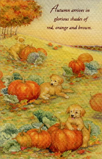 Puppies and Pumpkins (1 card/1 envelope) - Thanksgiving Card - FRONT: Autumn arrives in glorious shades of red, orange and brown.  INSIDE: And with it comes this season of harvest, of plenty, of thanks. May you celebrate this special time of year with those you treasure, doing what brings you joy. Happy Thanksgiving