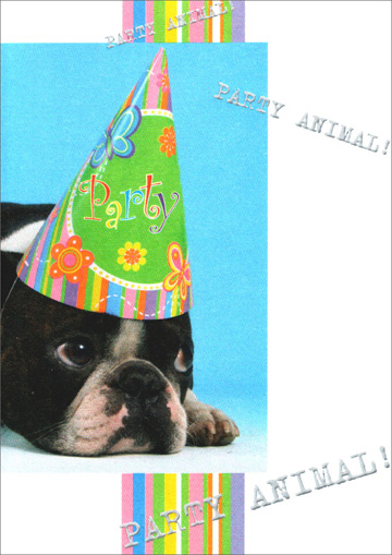 Boston Terrier Party Animal (1 card/1 envelope) Freedom Greetings Birthday Card - FRONT: Party Animal! Party Animal! Party Animal!  INSIDE: It's your birthday… Live it up!