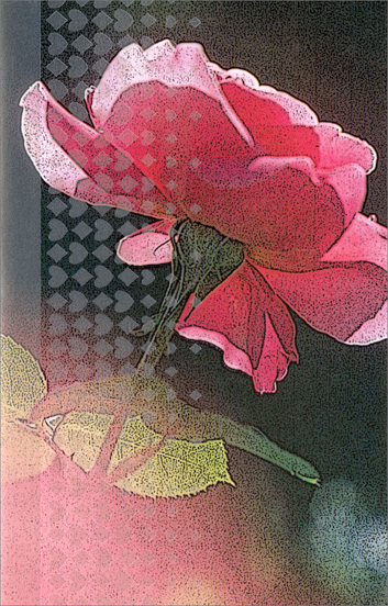 Large Pink Rose (1 card/1 envelope) Freedom Greetings Blank Card