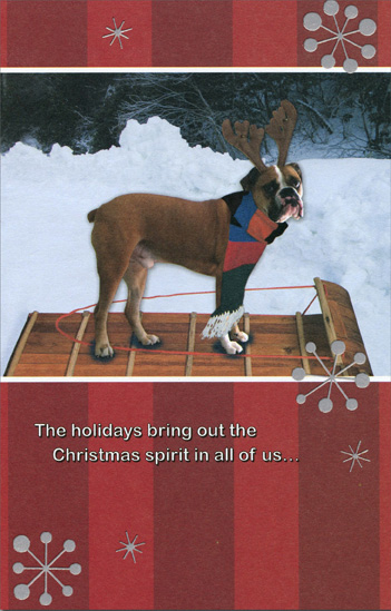 Boxer on Tobaggon (1 card/1 envelope) - Christmas Card - FRONT: The holidays bring out the Christmas spirit in all of us�  INSIDE: �some more than others! Merry Christmas