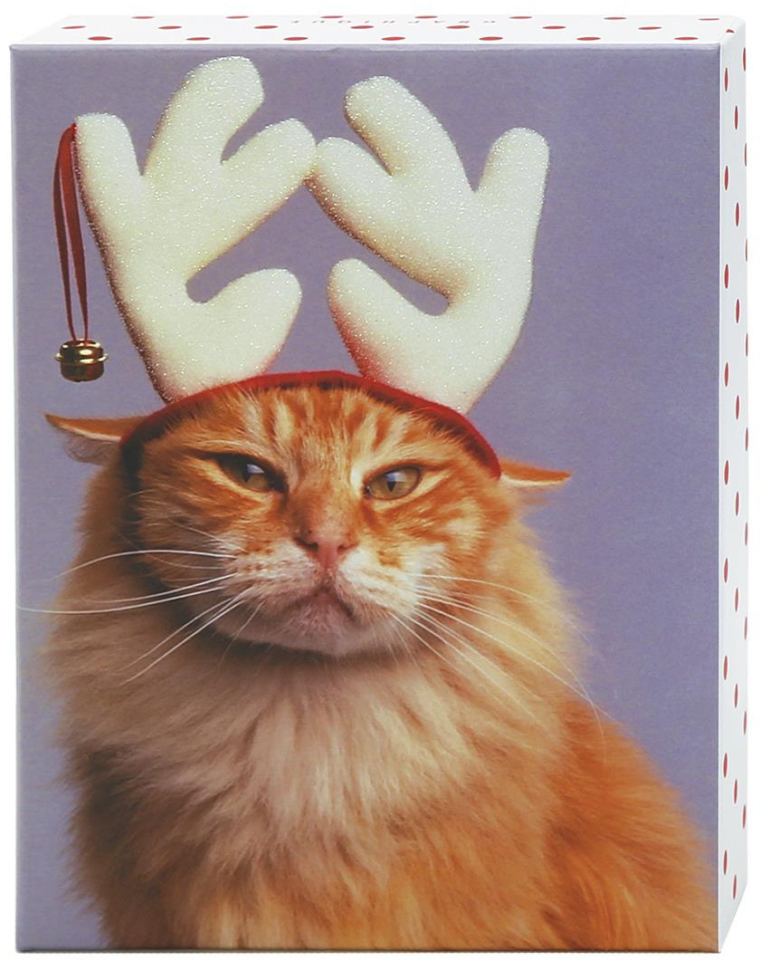 Boxed Cat Christmas Cards.Details About Cat Wearing White Antlers Box Of 20 Funny Graphique De France Christmas Cards