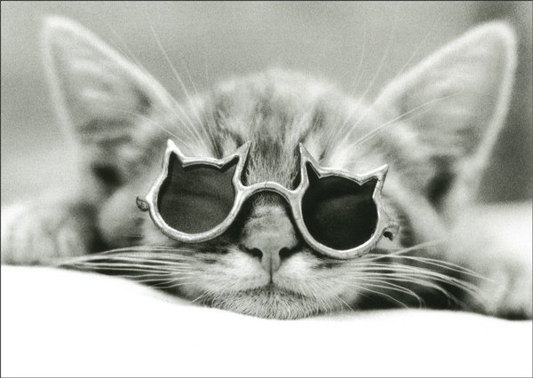 Kool Kat: Cat with Sunglasses (1 card/1 envelope) - Birthday Card - FRONT: No Text  INSIDE: Happy Birthday to the coolest cat around.