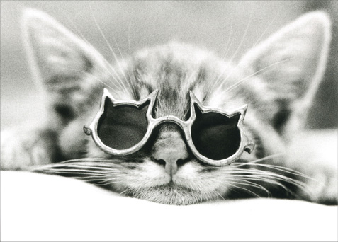 Kool Kat: Cat with Sunglasses (1 card/1 envelope) - Blank Card - FRONT: No Text  INSIDE: Blank Inside
