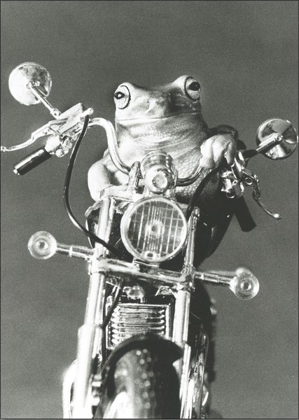 Frog On A Hog (1 card/1 envelope) Graphique de France Funny Birthday Card - FRONT: No Text  INSIDE: Hope your birthday is TOADally cool!