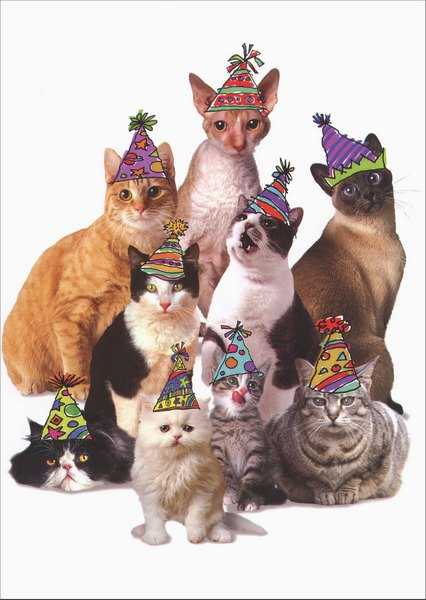 Cats in Party Hats (1 card/1 envelope) Graphique de France Birthday From All Card - FRONT: No Text  INSIDE: Happy Birthday from the whole Kit and Kaboodle!